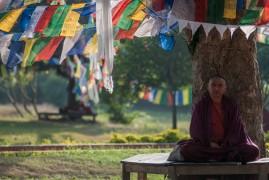 India: La Via del Buddha