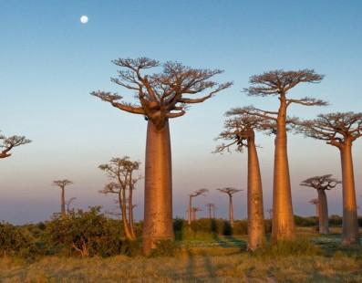 Madagascar: Un paradiso per gli amanti della Natura