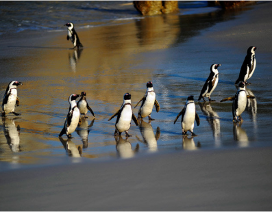 Sudafrica: Viaggio fotografico – Leoni, leopardi e squali bianchi