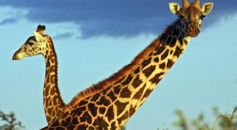 Tanzania/Zanzibar: I parchi del sud della Tanzania e le spiagge di Zanzibar