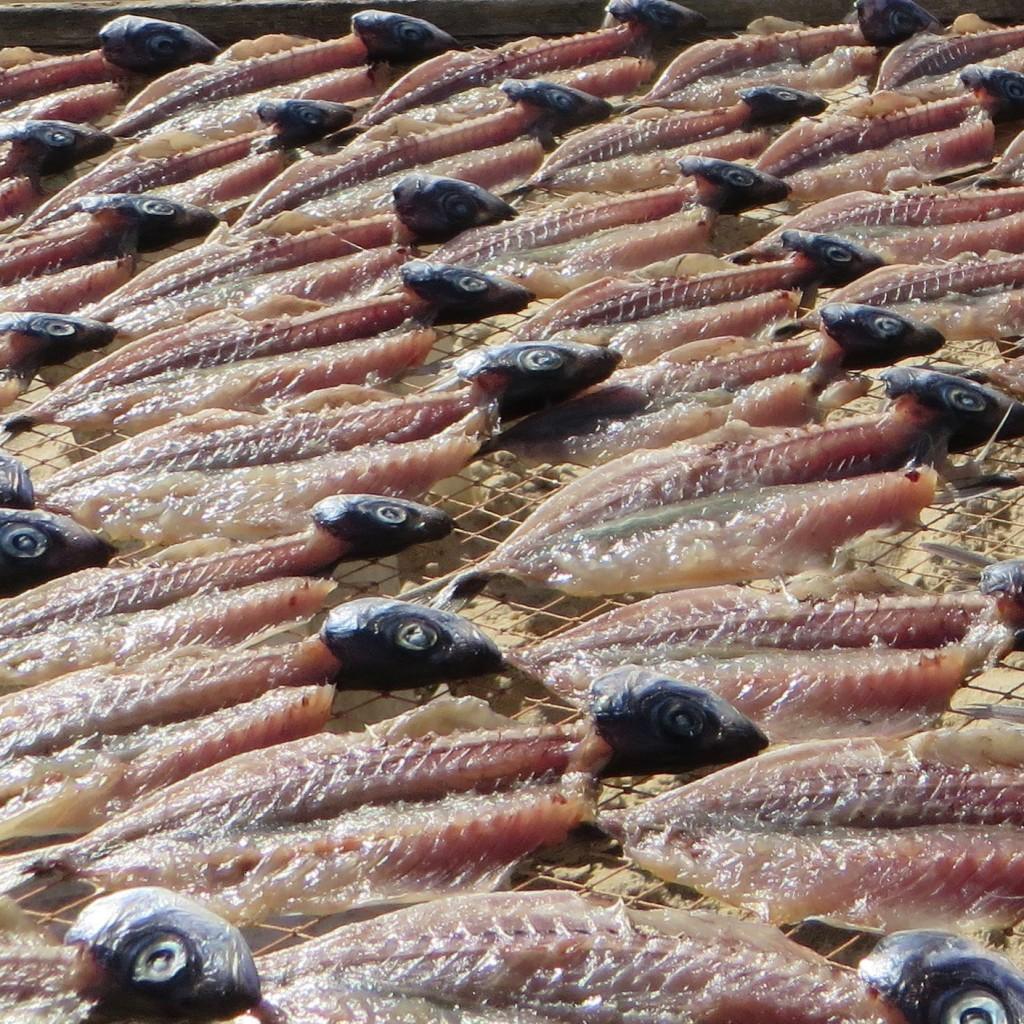 Portogallo, Nazaré. Il pesce appena pescato viene messo ad essiccare al sole sulla spiaggia. Foto di Enrico Radrizzani per La Compagnia del Relax.