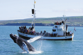 Islanda: Vita nell'Entroterra