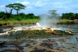 Uganda: safari africano
