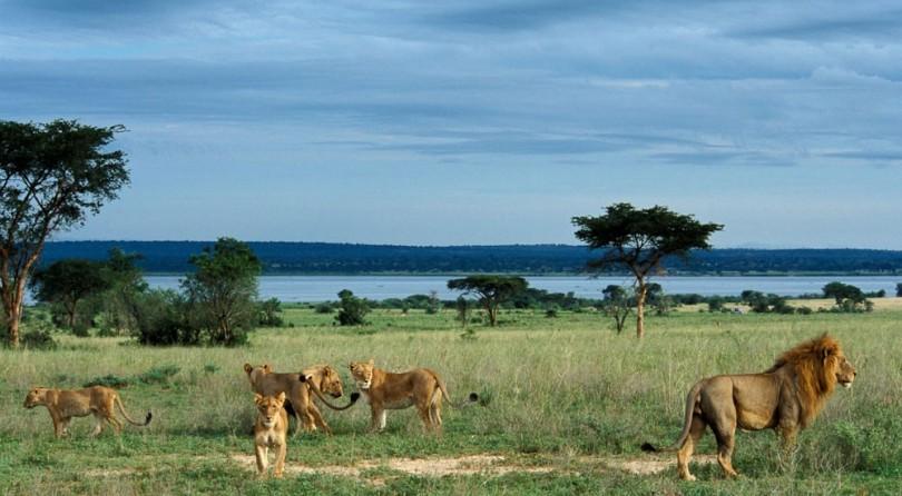 Uganda: nel cuore della natura africana
