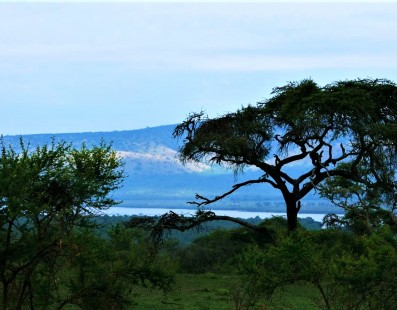 Nella natura dell'Uganda