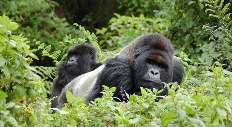 Uganda: trekking con i gorilla