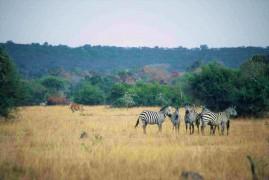 Safari nei parchi nazionali dell'Uganda