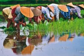 Vietnam classico, 7 giorni